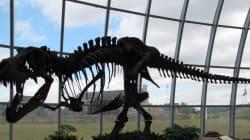 Βρέθηκαν ερυθρά αιμοσφαίρια και ίνες κολλαγόνου δεινοσαύρων - Πόσο εύκολη θα ήταν μια