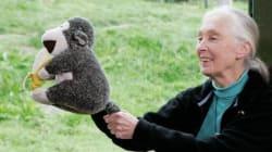 Jane Goodall: Von Schimpansen und anderen