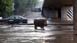 Πλημμύρα στην Τιφλίδα: 7 νεκροί και άγρια ζώα ελεύθερα στους