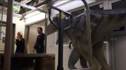 크리스 프랫이 실제로 공룡을