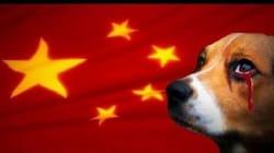 Οι σκύλοι είναι φίλοι μας και όχι φαγητό – Αντιδράσεις για το φεστιβάλ κατανάλωσης σκυλίσιου κρέατος στην