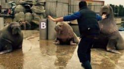 크리스 프랫을 따라하는 동물원