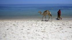 Tunisie: Annulations en série pour juillet chez les agences de voyage et tour-opérateurs
