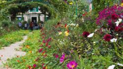 Comment préserver votre espace de verdure et profiter de la fraîcheur du végétal en période de forte