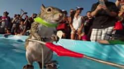 수상스키 타는 다람쥐 트위기를 고프로로
