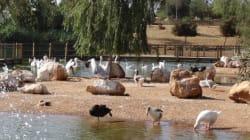 Le jardin zoologique national de Rabat primé par