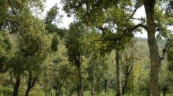 Tizi-Ouzou: un incendie ravage 35 hectares de