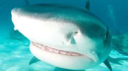 «Κυνηγήστε» καρχαρίες από το σπίτι σας- με «όπλο» τον υπολογιστή