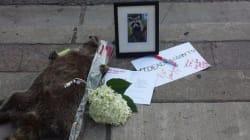 토론토 시민들은 '죽은 너구리'를 이렇게