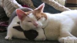 토끼와 고양이의 귀여운 케미(영상