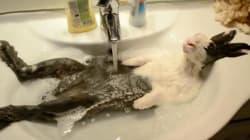 목욕하는 토끼의 귀여운 사진 뒤에 숨겨진
