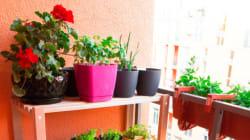 5 Tipps für den Garten in der