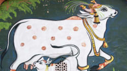 India's High Beef Exports Are Linked To Its Milk