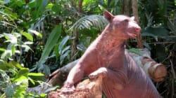 학대받던 서커스 곰이 25년 만에 자유를