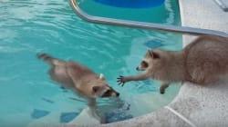 수영장에 들어간 형제가 걱정되는