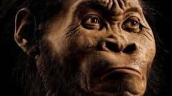 최고 300만년 전 살았던 인류 화석