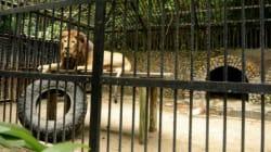 코스타리카, 동물원,