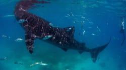 Ο ωκεανός αργοπεθαίνει: Υποδιπλασιασμός των πλασμάτων της θάλασσας από το