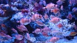 En 40 ans, les populations d'animaux marins ont chuté de