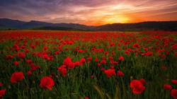 Les dix photos algériennes du concours international Wiki Loves Earth