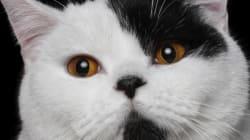 고양이에 대한 잘못된 속설 5를