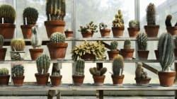 Αυτά είναι τα φυτά που είναι σχεδόν απίθανο να