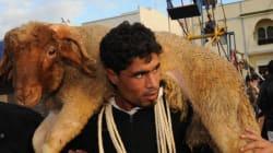 Le marché du mouton est moins porteur qu'il y a 10 ans en Tunisie selon Mohamed, vendeur