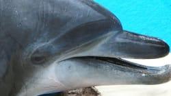 돌고래 태산이, 복순이와