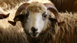 Fête du mouton: Les conseils santé de notre