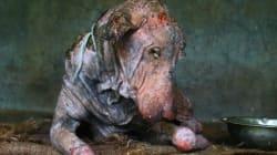 모든 희망을 버리고 길에서 죽어가던 개가 2달 만에 새롭게