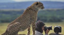 Wildtierfotografie - eine besondere
