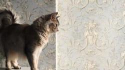 전 세계의 고양이 사진들이 마음을 녹일