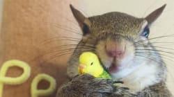 허리케인에 집을 잃은 다람쥐의 새