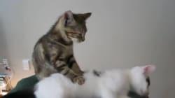 A quoi peuvent servir les chats? A vous