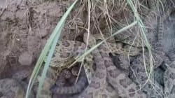 Εάν σας προκαλούν φόβο τα φίδια μην διαβάσετε αυτό το