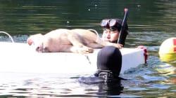 경찰이 돼지를 물에 빠뜨린