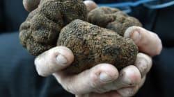Μια καλλιέργεια που δίνει καθαρό εισόδημα έως 900 ευρώ το