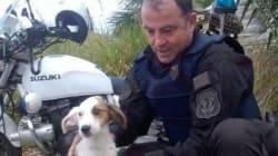 Αστυνομικός της ομάδας ΔΙΑΣ σώζει σκυλάκι από την εθνική οδό και το