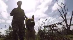 Γνωρίστε τον σκύλο που φυλάει τον τελευταίο αρσενικό ρινόκερο στον