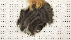 Ινδικό χοιρίδιο ή περούκα; Εμείς πάντως δεν μπορούμε να τα