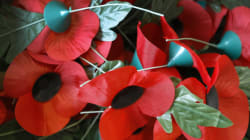 The Red Poppy Appeal Insults Victims Of