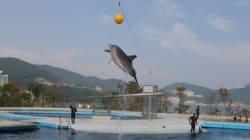 일본-한국-터키, '재수출'되는 돌고래의