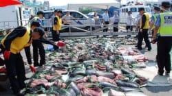 전국 최대 규모의 '밍크고래 불법포획' 조직이