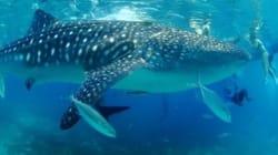 바다생물 중에서 가장 큰