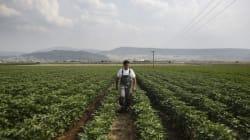 Οι αγρότες είναι παραγωγοί κι όχι ελεύθεροι