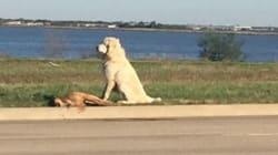 Η συγκλονιστική φωτογραφία που συγκίνησε το διαδίκτυο: Ο σκύλος που αρνήθηκε να εγκαταλείψει τον πεθαμένο φίλο