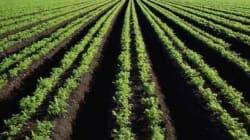 L'Algérie perd annuellement une superficie agricole utile de 300.000