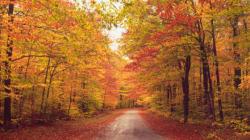 Vous êtes obsédé par l'automne? Il y a une explication scientifique à