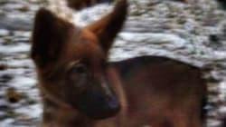 러시아, '연대의 표현'으로 프랑스에 강아지를