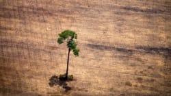 En Amazonie, des agriculteurs s'enrichissent tout en replantant la